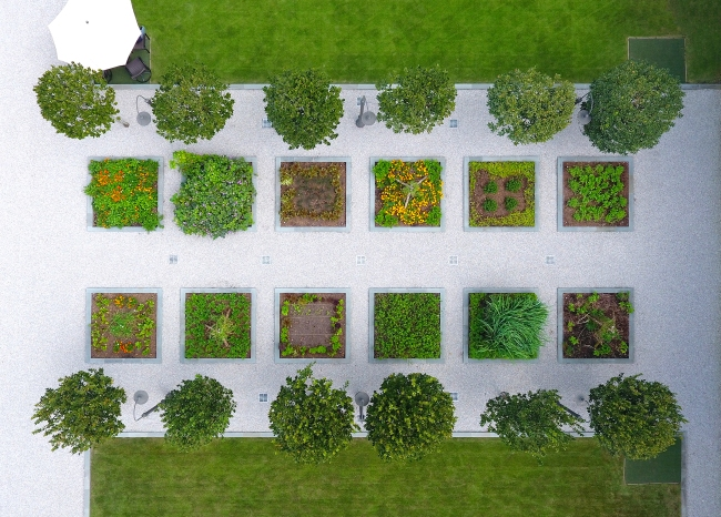 An aerial of the herb garden and shows the Zoro Zoysia lawn surrounding the tee boxes.