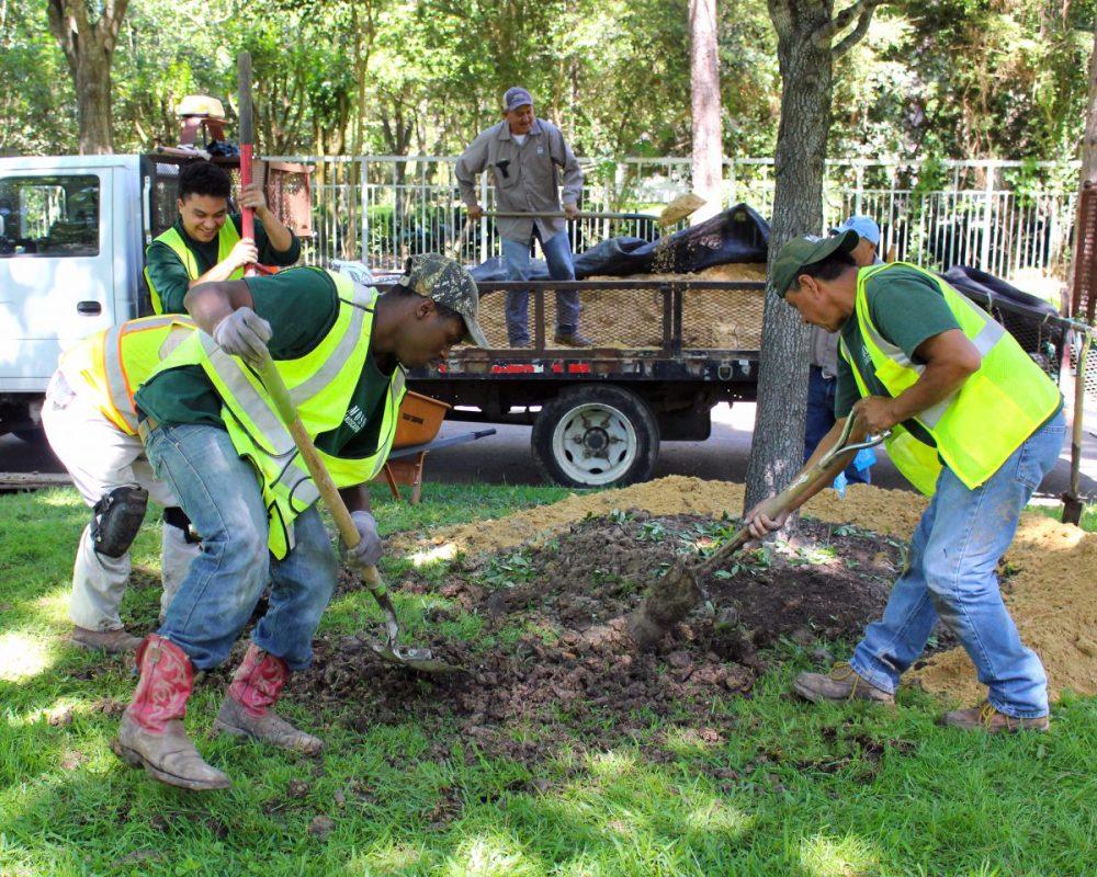 Planting Oak