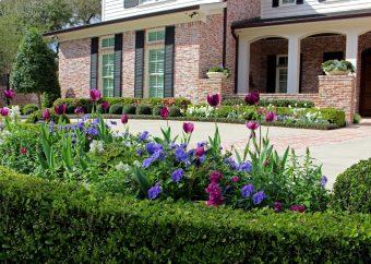 Spring Color In Full Bloom