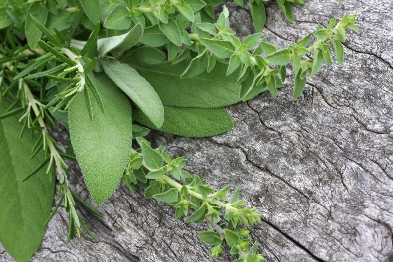 Rooftop Herb GardenProgress